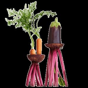 online-cookingclasses-advice-dennis-gasper-home